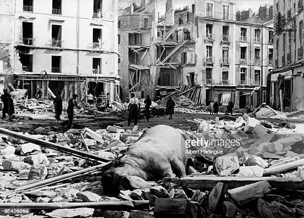 World War II. Bombing of Nantes, on September 16, 1943. Horse killed on the place de Bretagne.