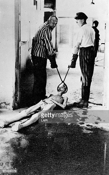 World War II Dachau concentration camp Corpse dragged corpse towards the oven