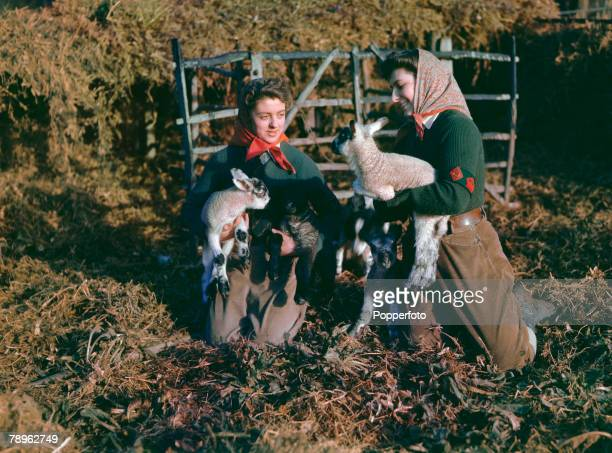 February 1943 Land Army women with two lambs on a farm in Suffolk England