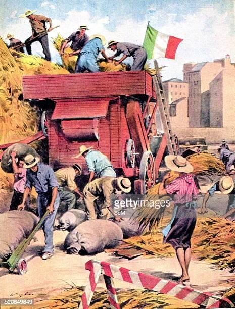 World War IIWar in Italy 1944Battle of the grain In the Italy in the war the wheat is grown in parks and gardens La Domenica del Corriere...