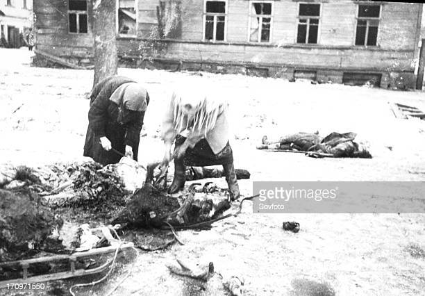 a horse killed during the bombing is used for food during the leningrad blockade 1943