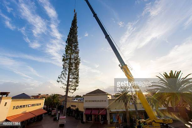 worlds tallest christmas tree arrives at citadel outlets on october 19 2015 in city of commerce - Worlds Tallest Christmas Tree