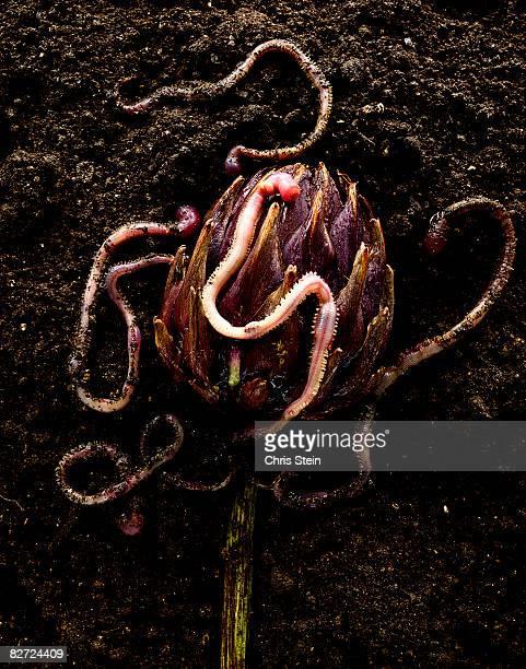 Worm Flower 4