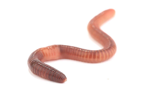 Worms Free