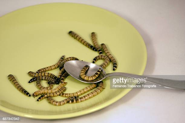 Worms on plate. Ready to eat