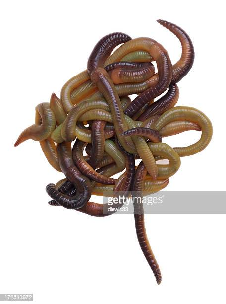 worms! - worm stock photos and pictures