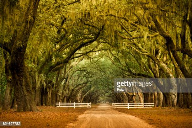 Wormsloe historic Plantation Savannah, Georgia USA
