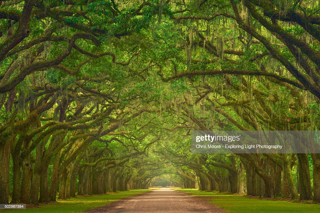 Wormsloe Plantation : Stock Photo