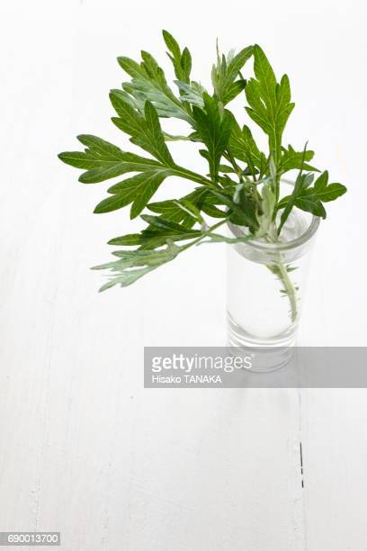 wormwood - japanese mugwort stock pictures, royalty-free photos & images