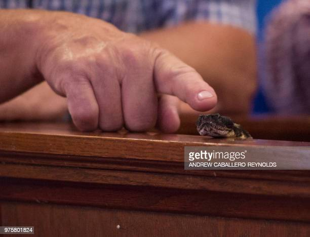 A worshipper points to a timber rattlesnake during a Pentecostal serpent handlers service at the House of the Lord Jesus church in Squire West...