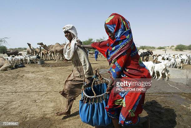 Nomads couple carry water from a well to feed their camels at the Woudi desert Camp preparatory for long trek following threat of expulsion by the...