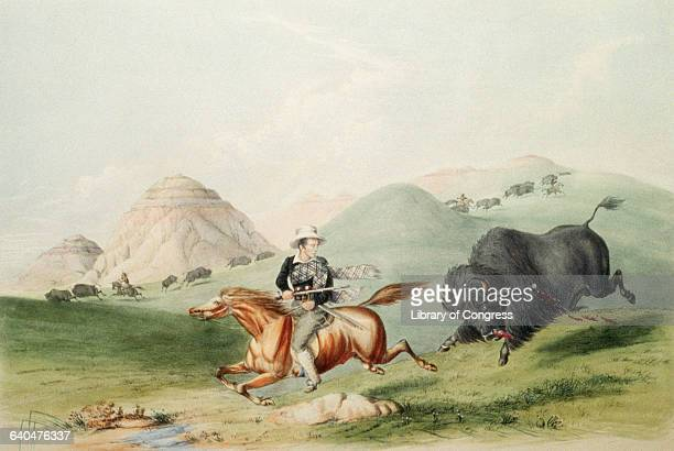 A wounded buffalo chases a hunter in this image from Catlin's North American Indian Portfolio Hunting Scenes and Amusements of the Rocky Mountains...