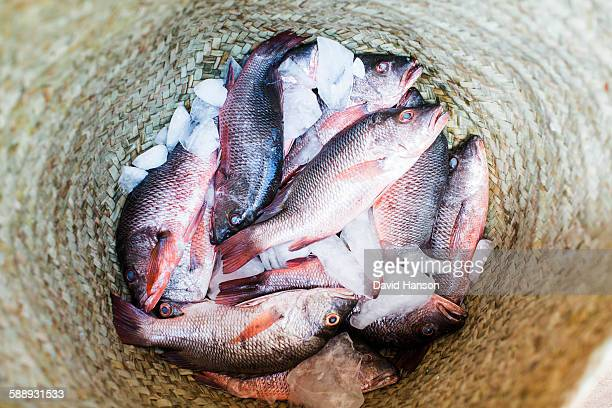 LAMU, INDIAN OCEAN, KENYA, AFRICA. A woven basket full of small red fish on ice.