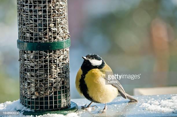 wow e tutti per me. cincia geat sulla mangiatoia per uccelli - cinciallegra foto e immagini stock