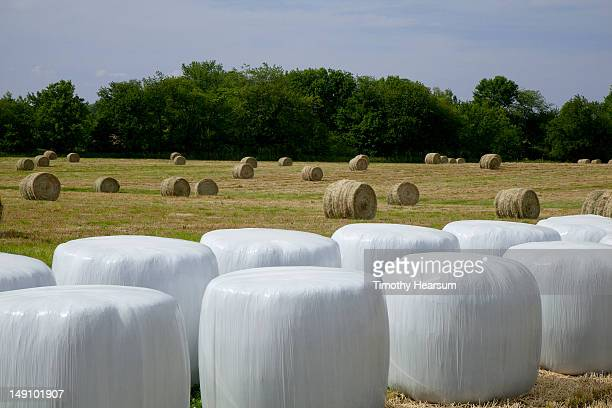 wrapped and unwrapped hay bales in field - timothy hearsum stock pictures, royalty-free photos & images