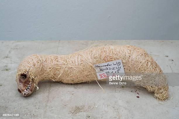 Wrapped animal skeleton, close-up