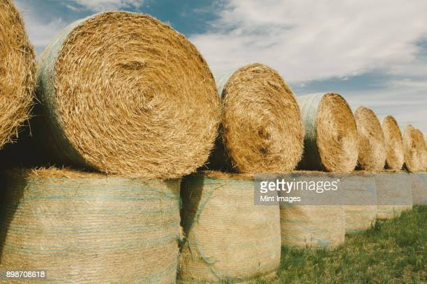 wrapped round stacked hay bales on the prairie at harvest time in montana. - bundle stock pictures, royalty-free photos & images