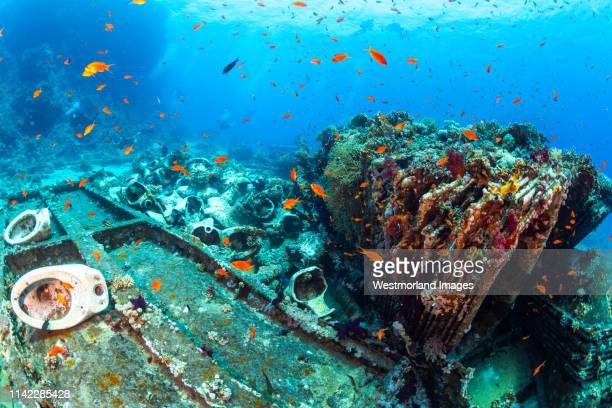 wreck of the yolanda, northern red sea, egypt. - sunken stock pictures, royalty-free photos & images
