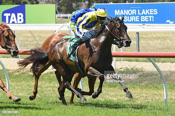 Wrecking Ball ridden by Jamie Mott wins Martin Collins Australia Maiden Plate at Werribee Racecourse on January 27 2017 in Werribee Australia