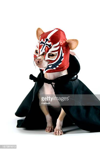 lucha libre - dog mask stock pictures, royalty-free photos & images
