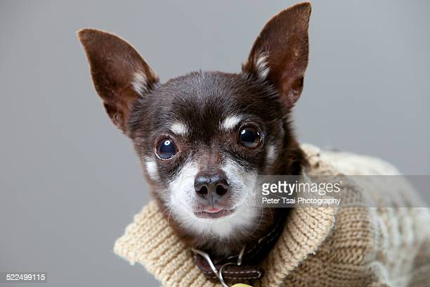 Wright was a handsome energetic chihuahua who we fostered through Austin Pets Alive For a couple of months He ended up being adopted by our neighbor...