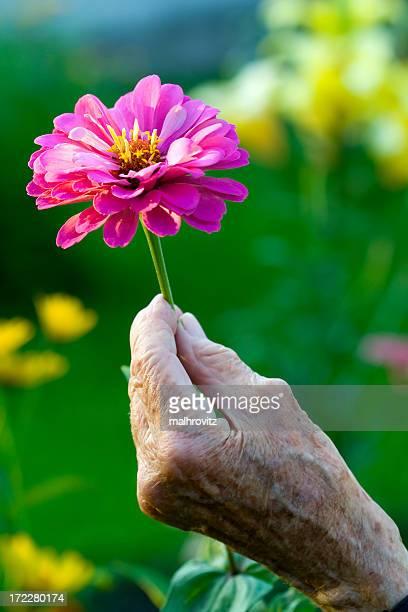 しわ加工の手がピンクの花