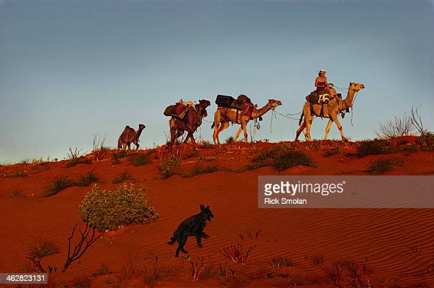 Writer Robyn Davidson is photographed with her camels and dog Diggity for National Geographic in 1977 in the outback Australia Central Australias...