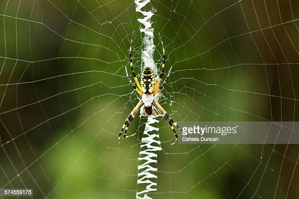 Writing Spider on her web