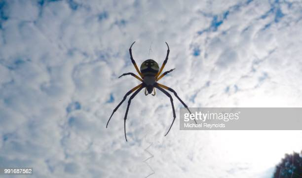 writing spider - spider stock pictures, royalty-free photos & images