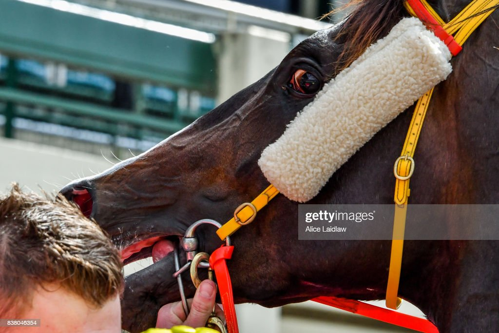 Written Choice after winning the Chandler Macleod Plate at Ladbrokes Park Hillside Racecourse on August 23, 2017 in Springvale, Australia.