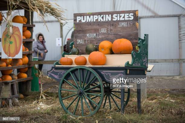 A written prices on a board for pumpkin selling purposes with showing the exact actual size of each Pumpkin Pumpkin market is one of the exiting...