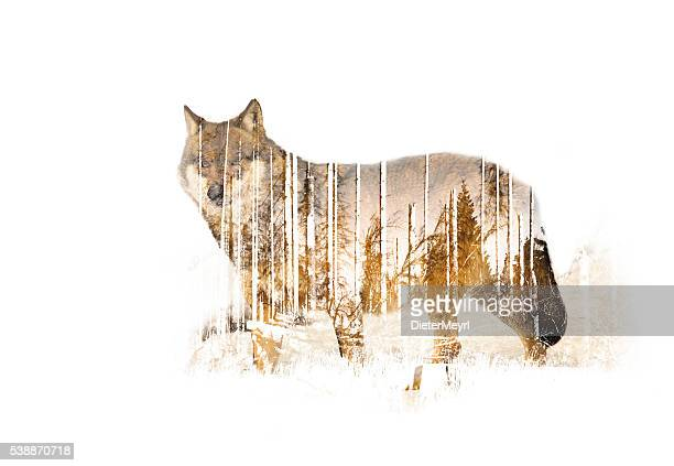 Wulf Double exposure