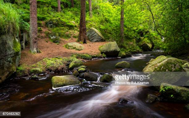wyming brook nature reserve, sheffield, south yorkshire, england - south yorkshire stock pictures, royalty-free photos & images