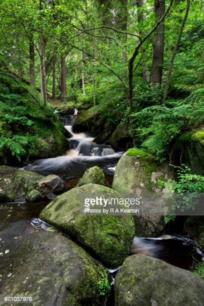 Wyming brook nature reserve, Sheffield, South Yorkshire, England