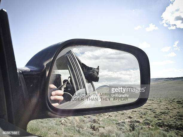 USA, Wyoming, Dog looking out car window