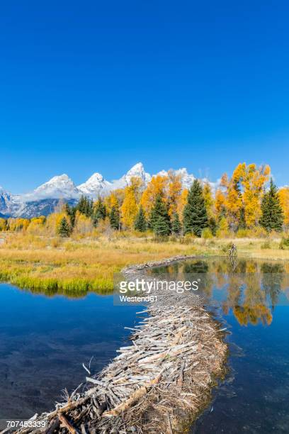 usa, wyoming, grand teton national park, snake river with beaver dam and teton range in the background - beaver dam stock pictures, royalty-free photos & images