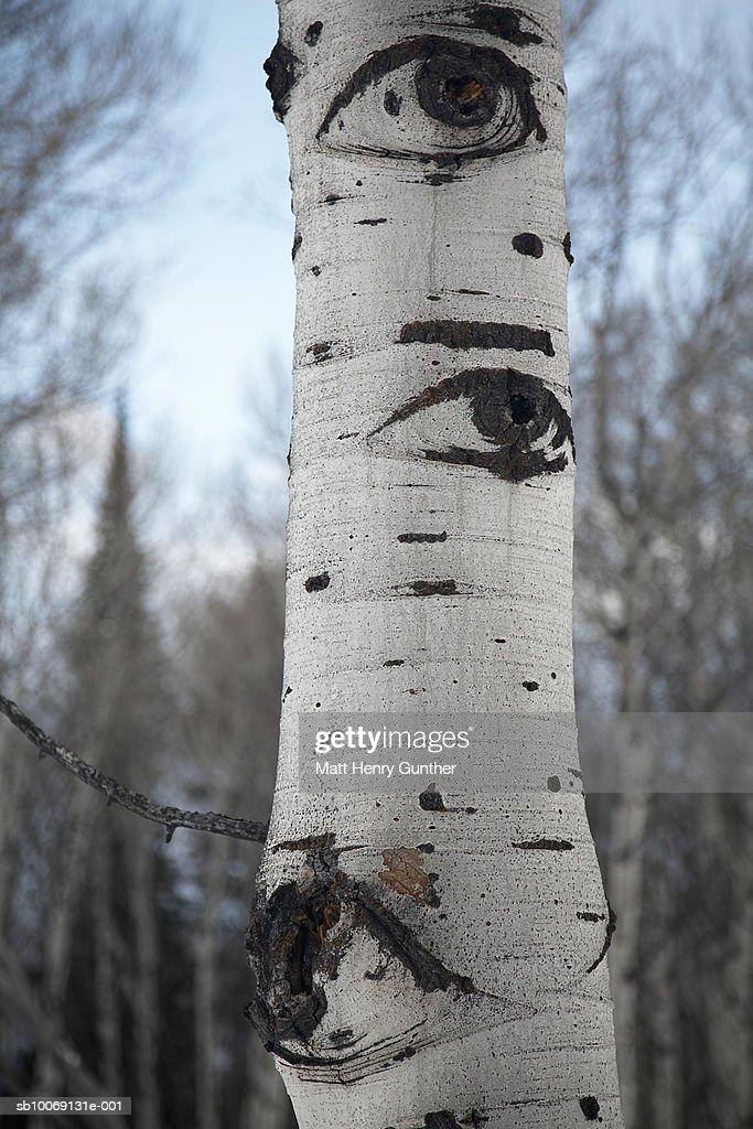 USA, Wyoming, Jackson Hole, Eyes carved on tree trunk, close-up : Stockfoto