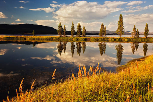 USA, Wyoming, Yellowstone National Park, Trees And Pond At Sunset Wall Art