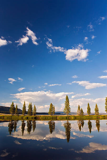 USA, Wyoming, Yellowstone National Park, Trees Reflecting In Pond Wall Art