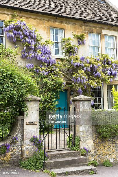 Wysteria flowering shrub in bloom at traditional English period house in quaint village of Castle Combe in The Cotswolds UK