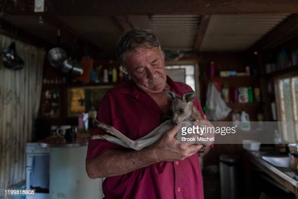 Wytaliba resident and wildlife carer Gary Wilson pats an Eastern Gray Kangaroo on January 14 2020 in Wytaliba Australia Gary and with his partner...