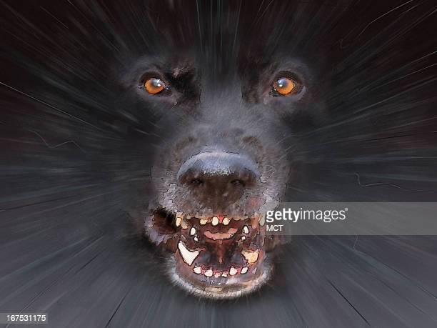 x 48 in / 164x123 mm / 558x419 pixels Image of angry dog attacking