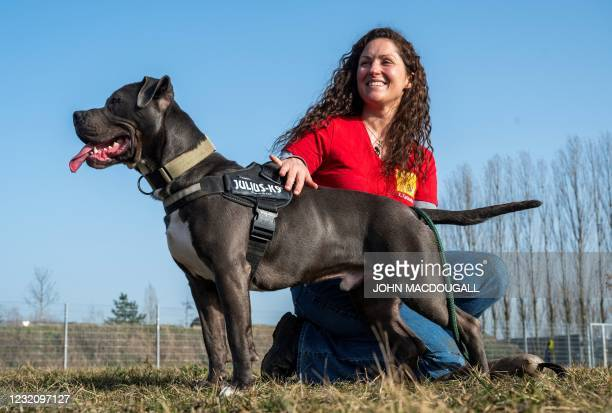 Xenia Katzurke, behavioral therapist for dogs at the Tierheim Berlin animal shelter, holds an American Staffordshire Terrier Mix called Marti, as she...