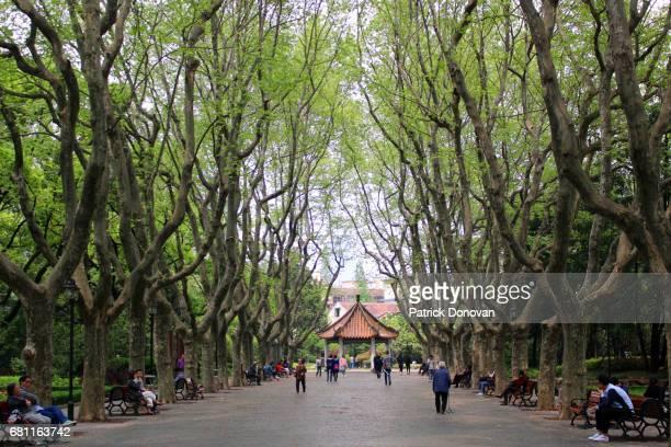 xiangyang park, shanghai, china - barrio francés fotografías e imágenes de stock