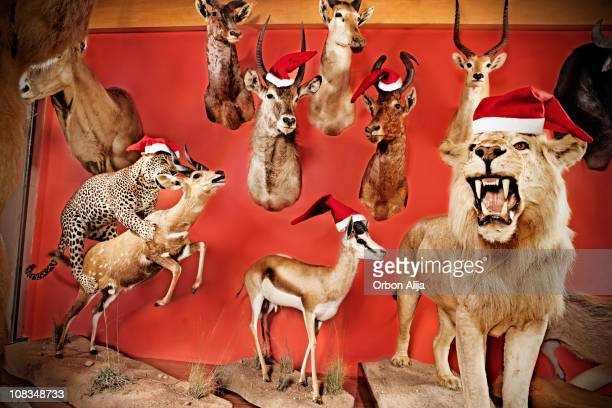 xmas animals - dead deer stock photos and pictures