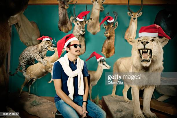 xmas animals - lion feline stock pictures, royalty-free photos & images