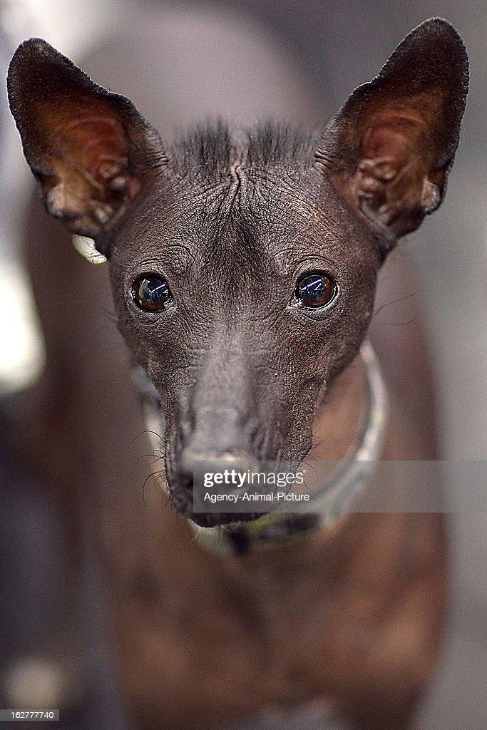 CACIB Dog Exhibition : News Photo