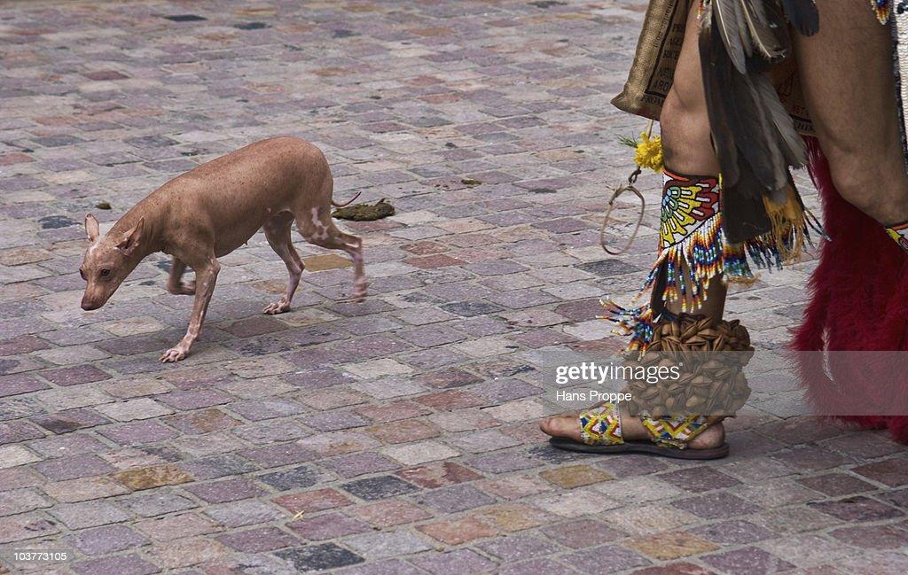 Xoloitzcuintli : News Photo