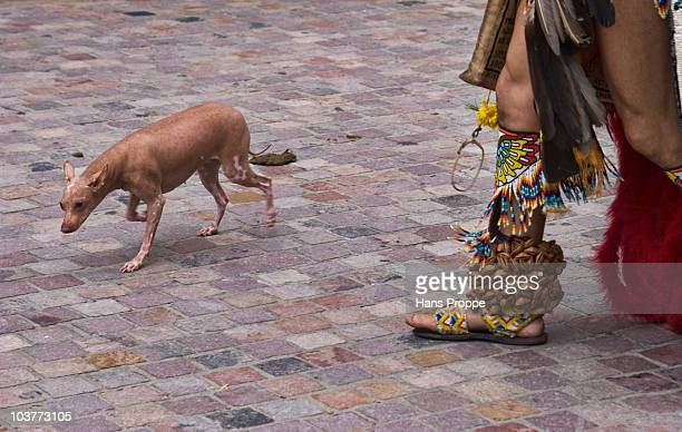 Xoloitzcuintli dog, an ancient breed of dog favored by the Aztecs of Mexico. Photo taken during the Blessings of the Animals parade at the Mission...