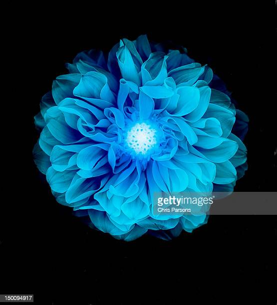 X-ray like image of a flower.